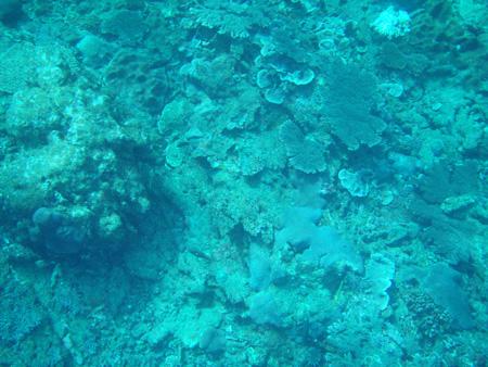 母島のサンゴ礁