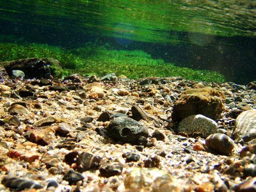 清水川の水中