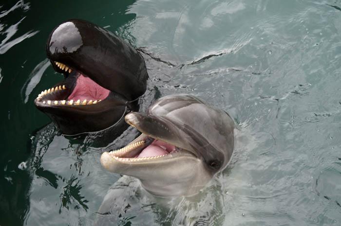 クジラとイルカ
