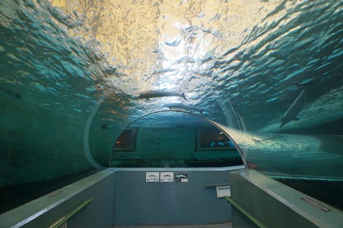 くじらの博物館海洋水族館