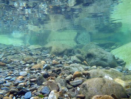 面河渓水中