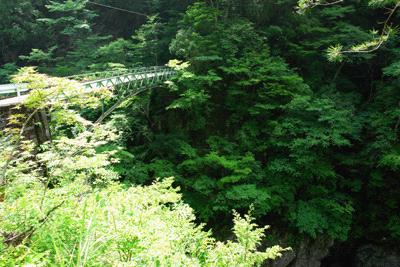 面河渓の橋