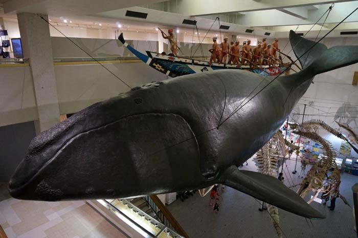 くじらの博物館クジラ模型