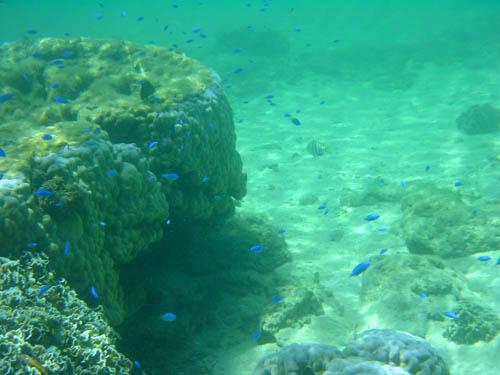 西表島星砂の浜サンゴ礁