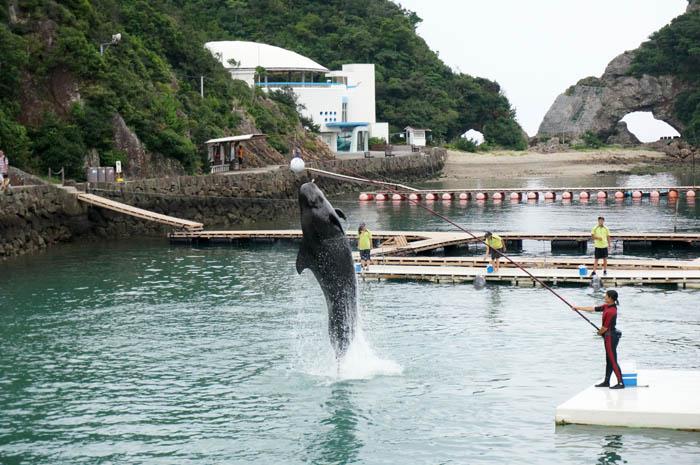 くじらの博物館クジラショー