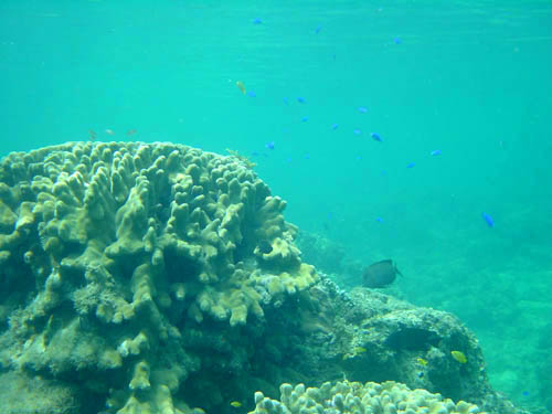 西表島星砂の浜珊瑚礁