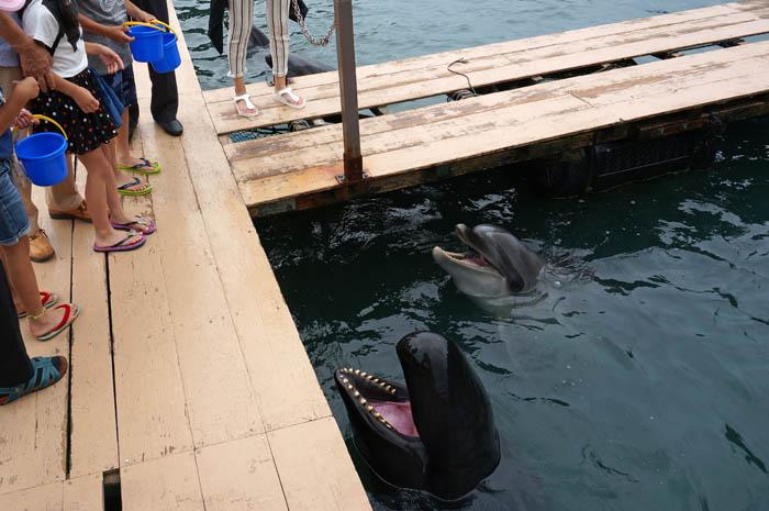 くじらの博物館クジラの餌付け