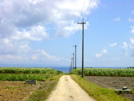 波照間島のサトウキビ畑