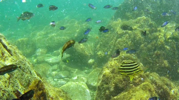 竜ヶ浜の魚
