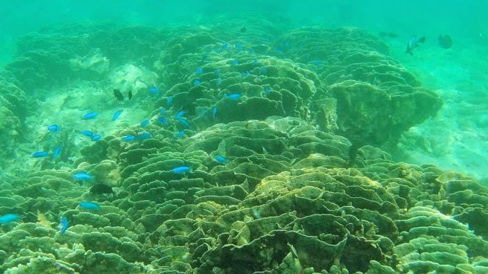 柏島のサンゴ礁
