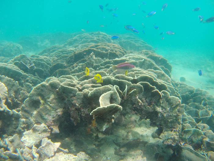 柏島のサンゴ