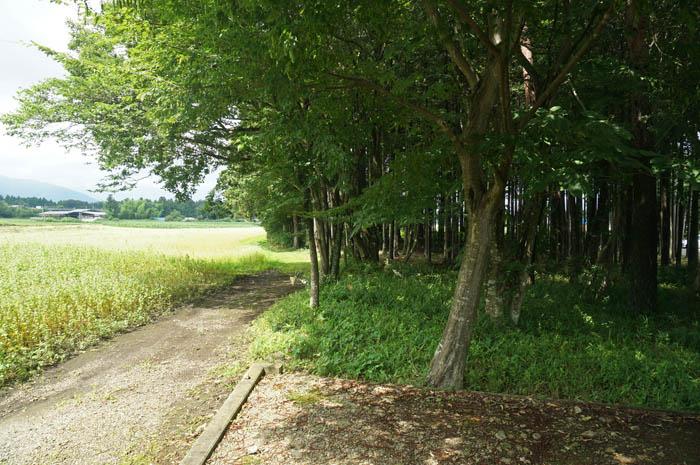 ファーム高林坊のそば畑