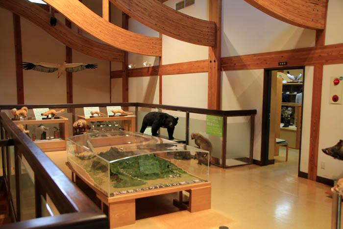 コウノトリ文化館収蔵室