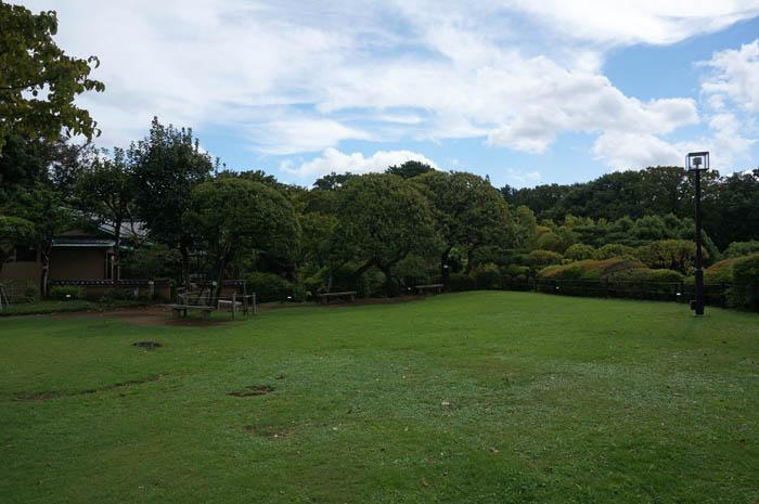等々力渓谷日本庭園芝生広場