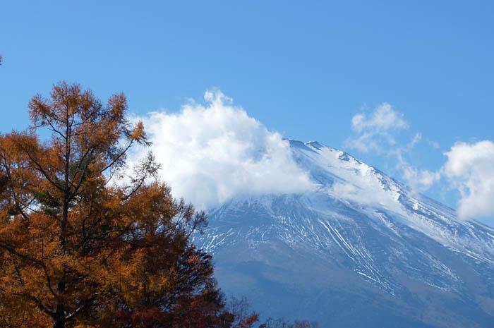 富士山とカラマツの黄葉