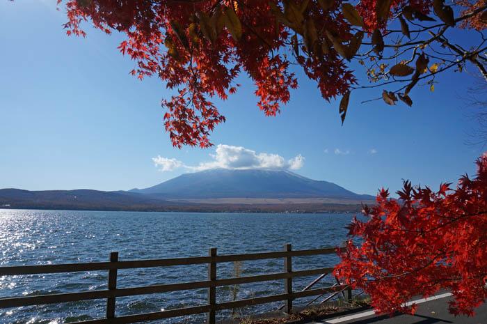 紅葉の山中湖と富士山